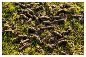 Lawns Can Be Aerated Any Time Of Year Golf Courses Aerate Their Greens Every Because Its Great Benefit I Would Recommend Aerating Your Lawn At